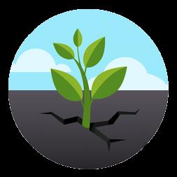 Green Plant 5x5